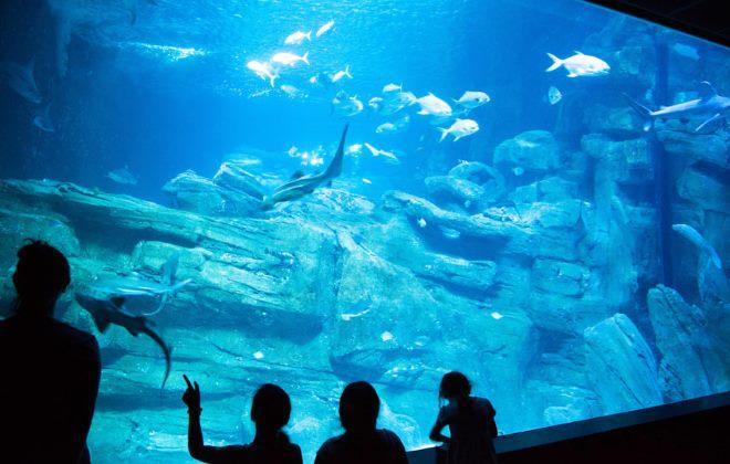 Океанариум «СинеАква»
